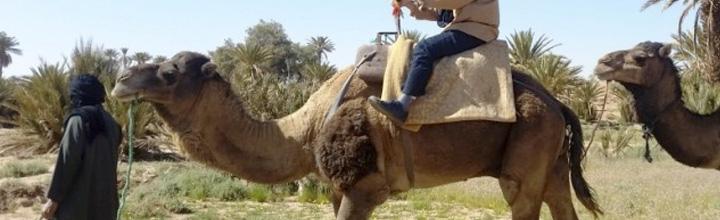 Day trip from Ouarzazate